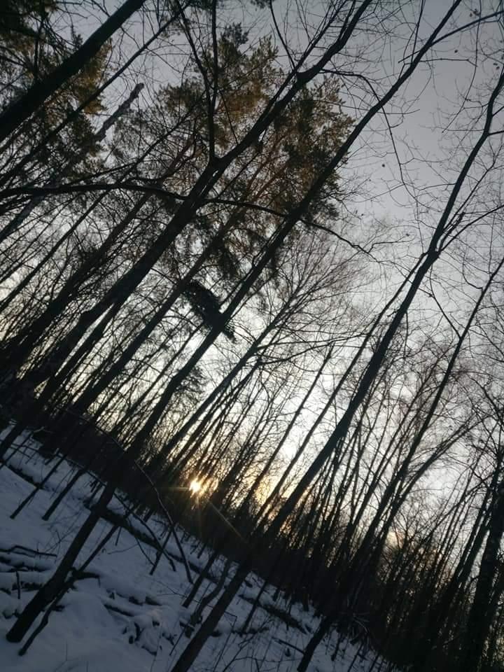 Солнце за деревьями