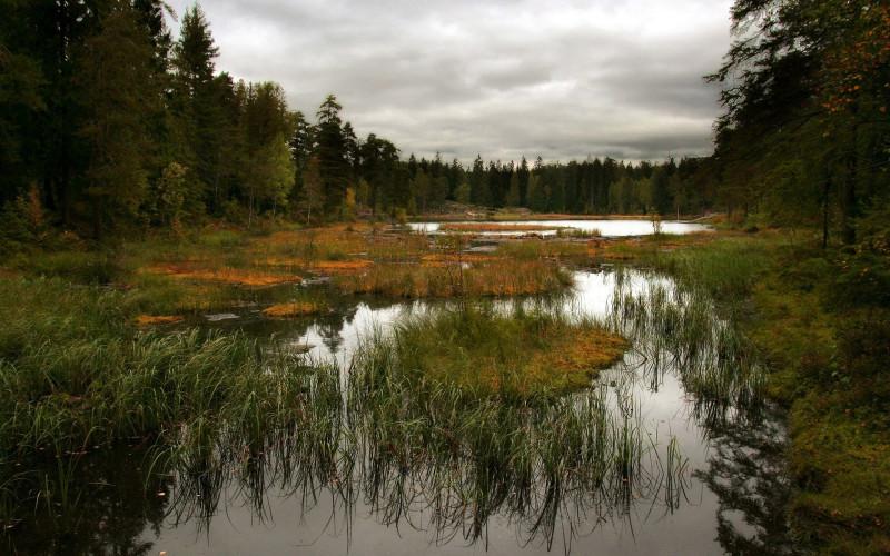 Autumn-bogs