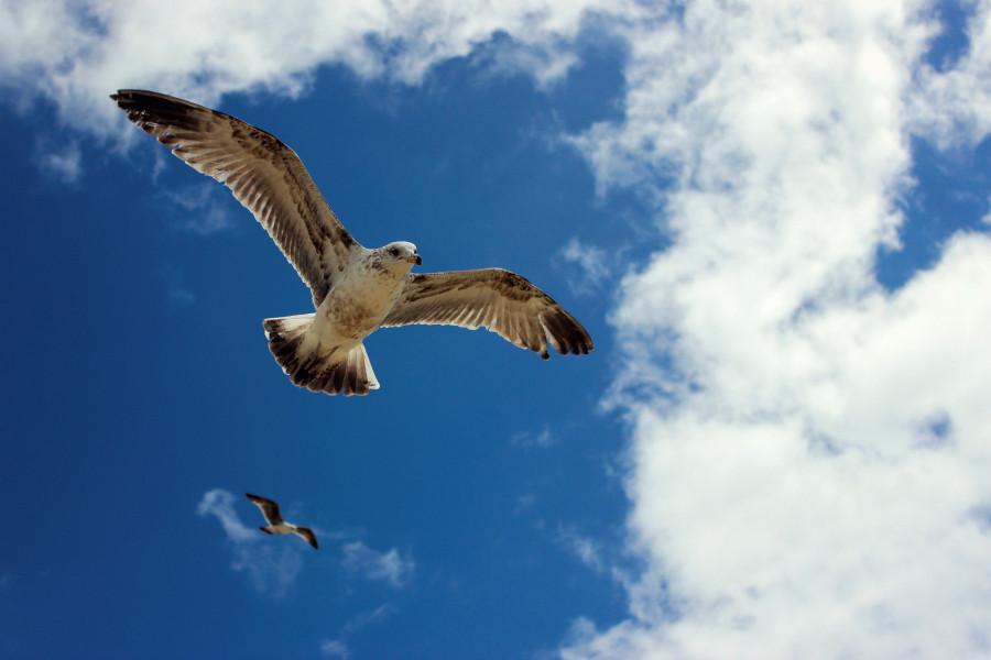 Чайки01.jpg