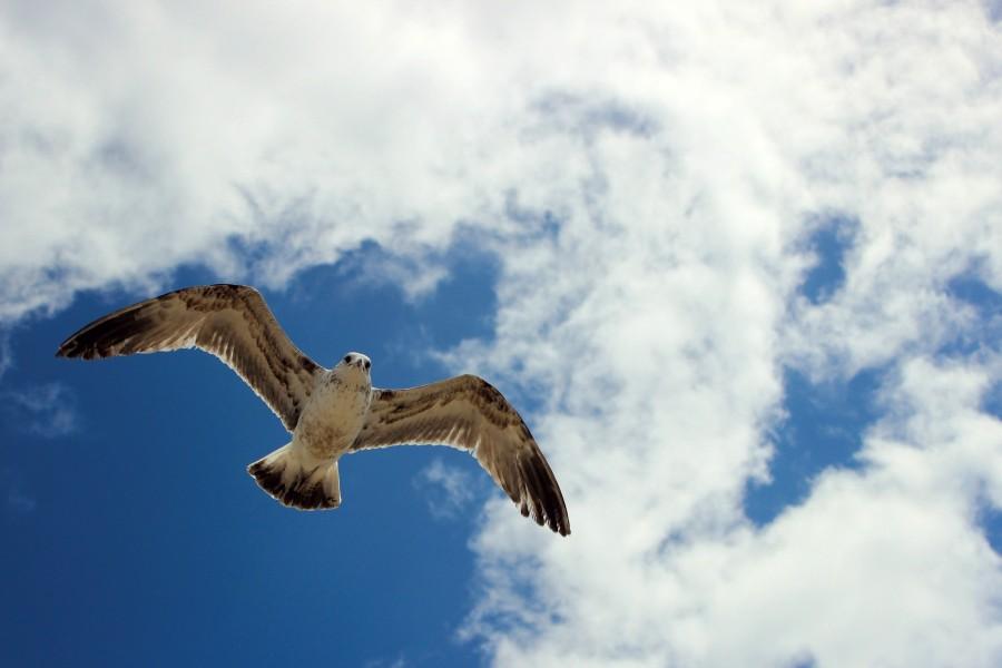 Чайки03.jpg