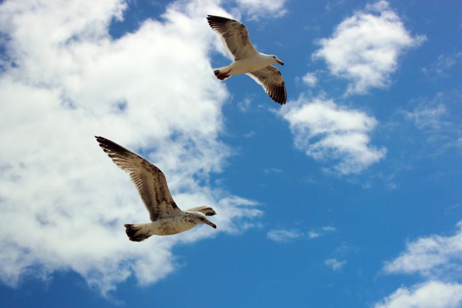 Чайки04.jpg