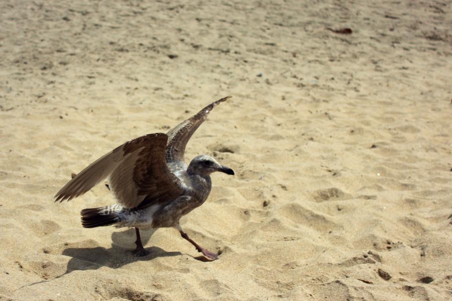 Чайки06.jpg