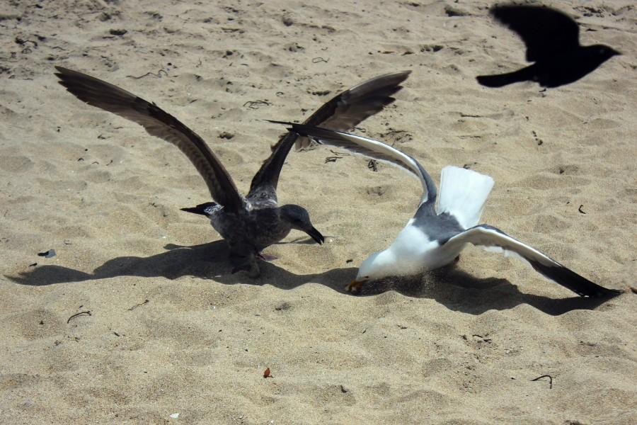 Чайки07.jpg