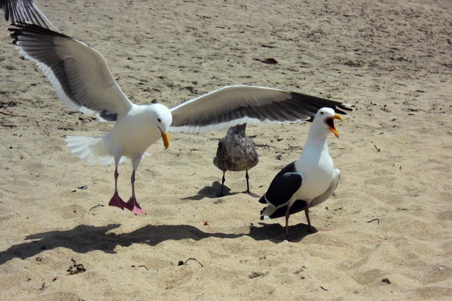 Чайки09.jpg