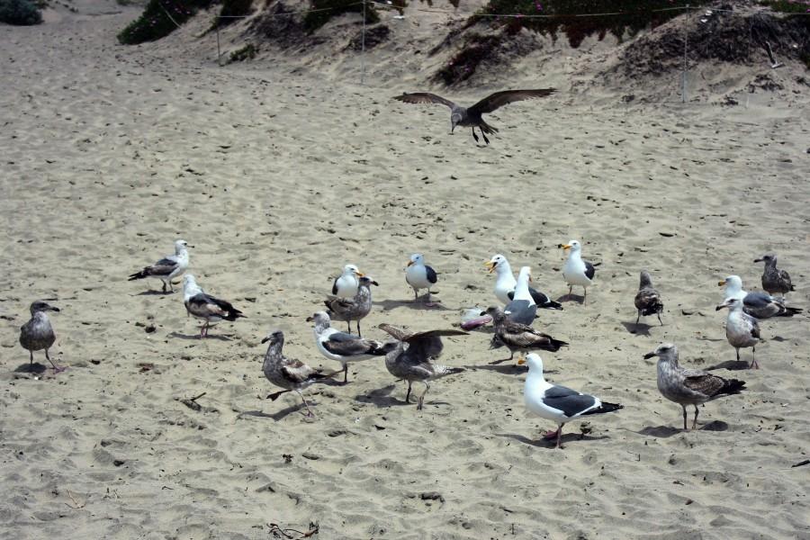 Чайки13.jpg