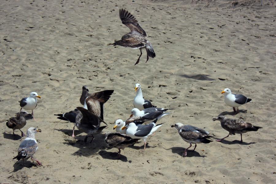 Чайки15.jpg