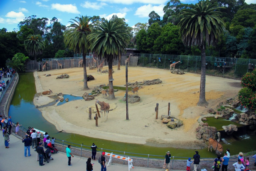 Zoo16.jpg