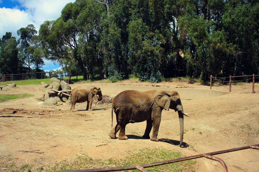 Zoo27.jpg
