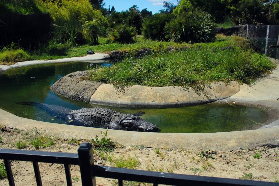 Zoo29.jpg