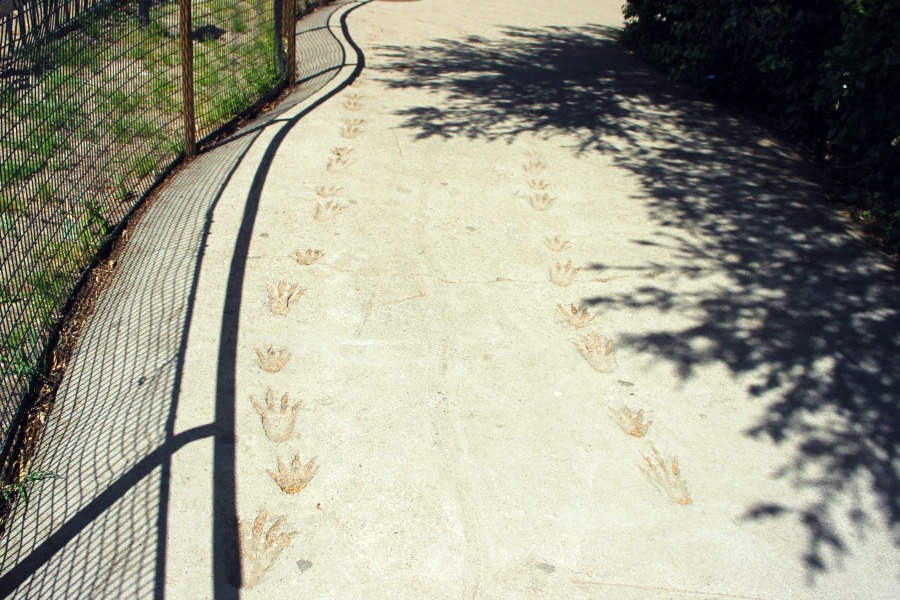 Zoo30.jpg
