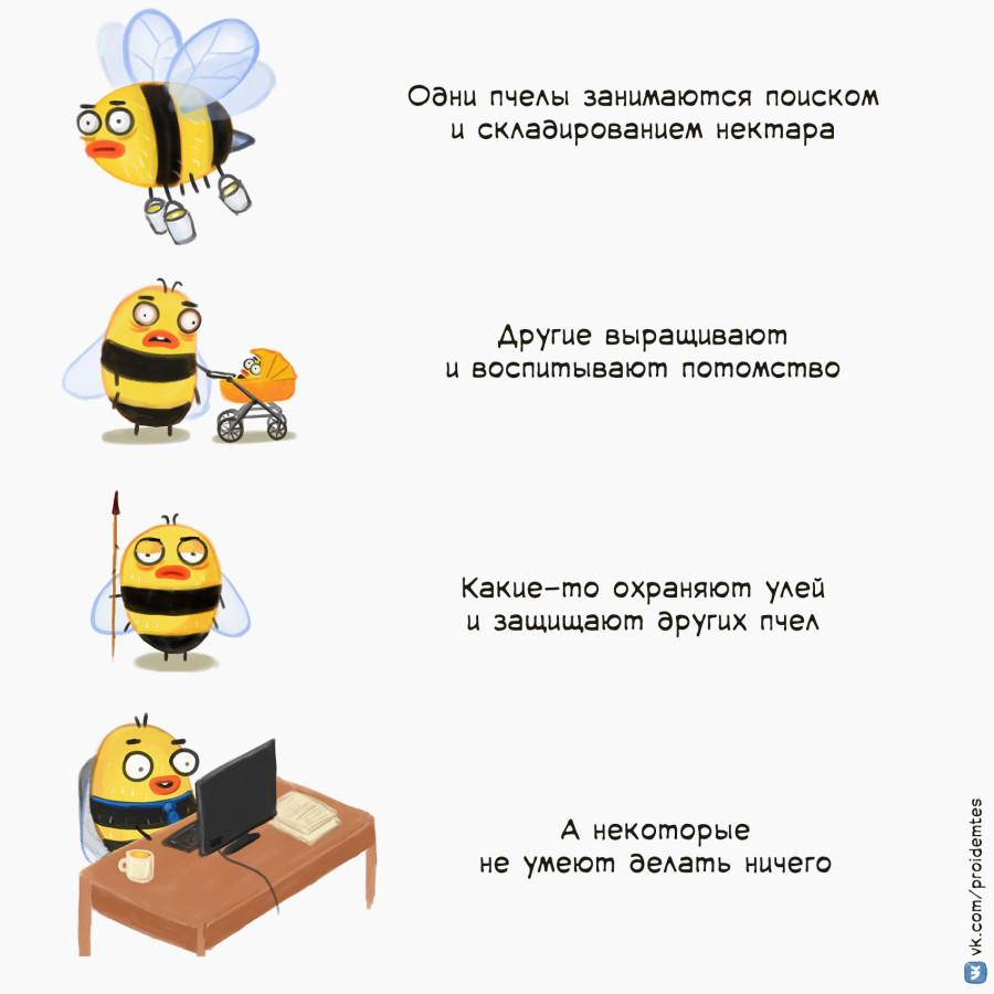 Пчелы мед9