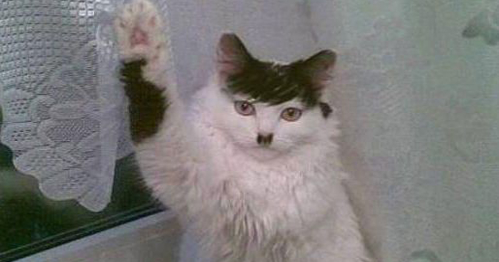 hitler-cat