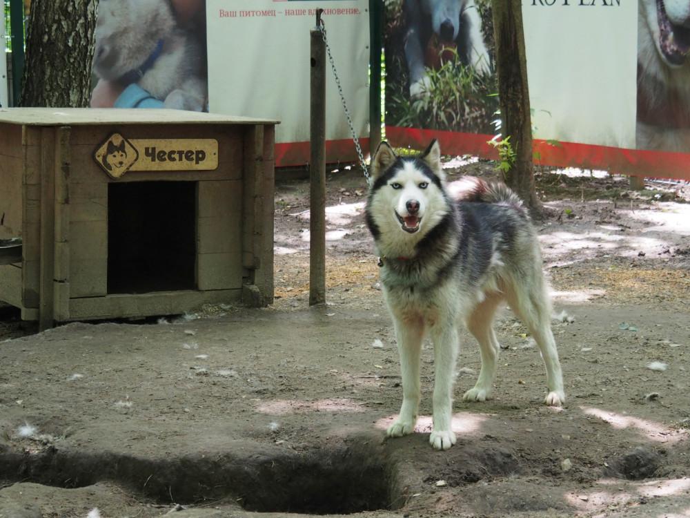 Хаски-парк Сокольники