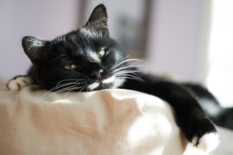 cat-3430571_960_720