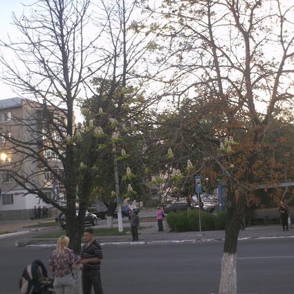 kashtan