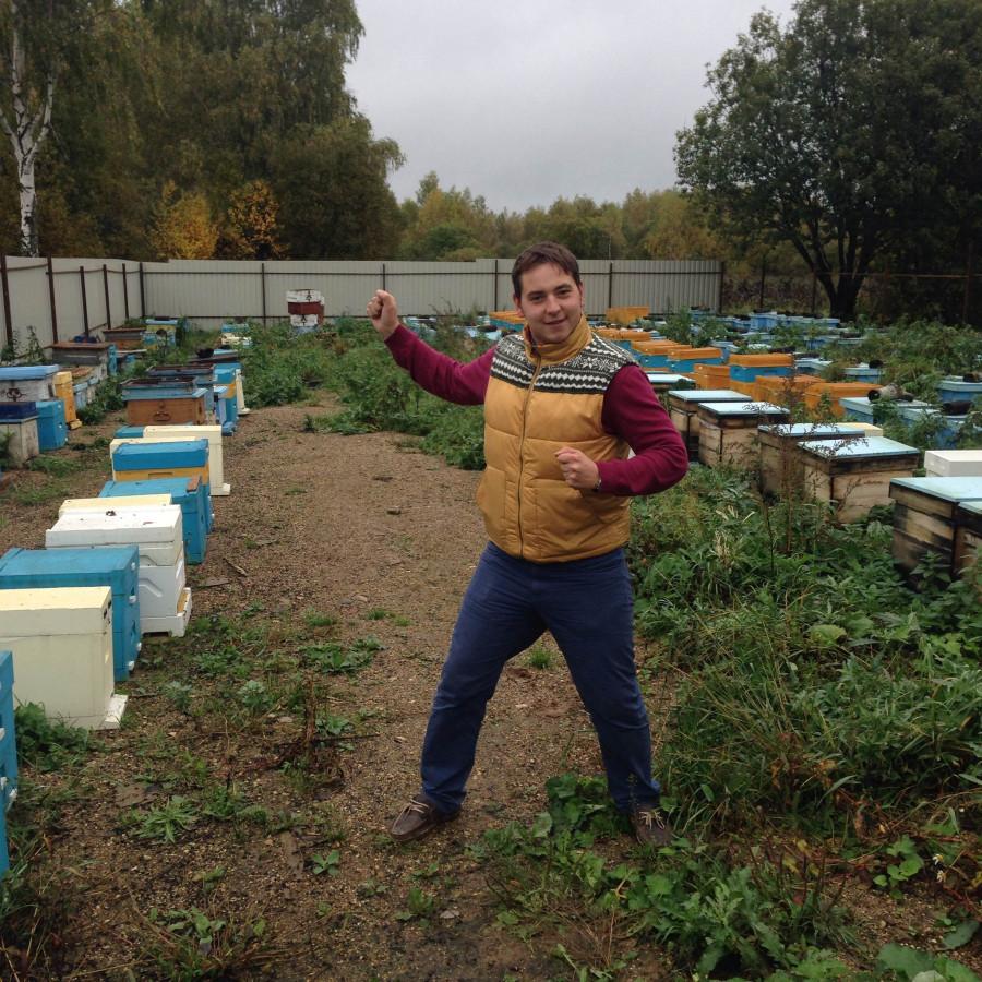 пчелы9