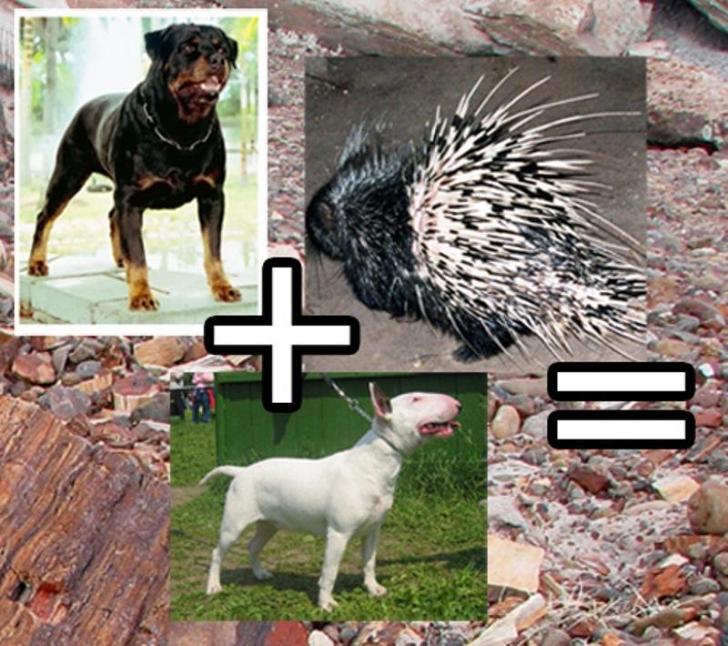 Если скрестить собаку и дикообраза (5 фото) .