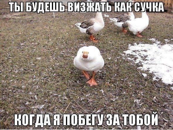 1396862878_1100175771