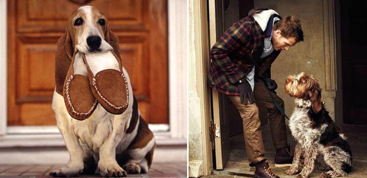 Картинка собака - друг человека
