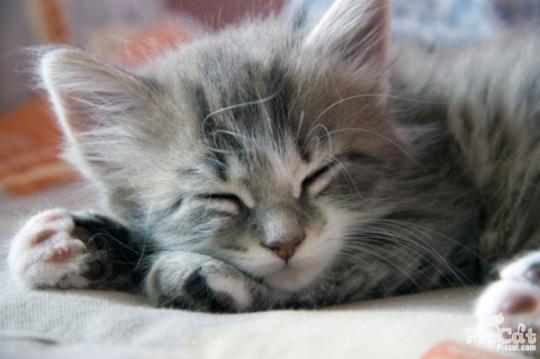sleeping_kitty