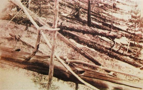 Tunguska_event_fallen_trees