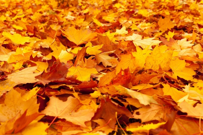 Кленовые листья от боли в суставах рецепт