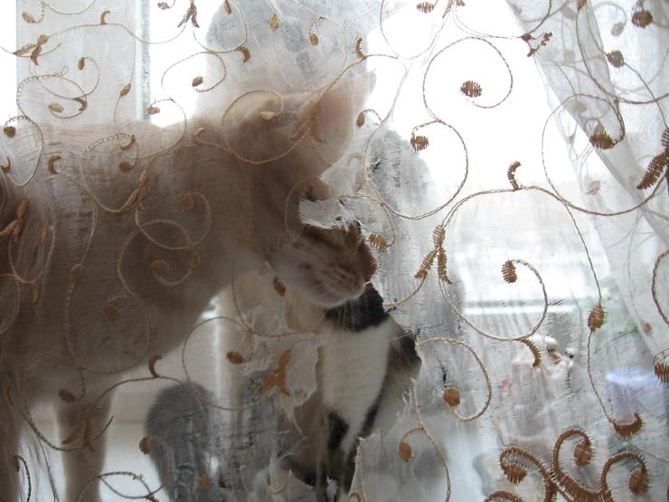 Коты Медведицы 1