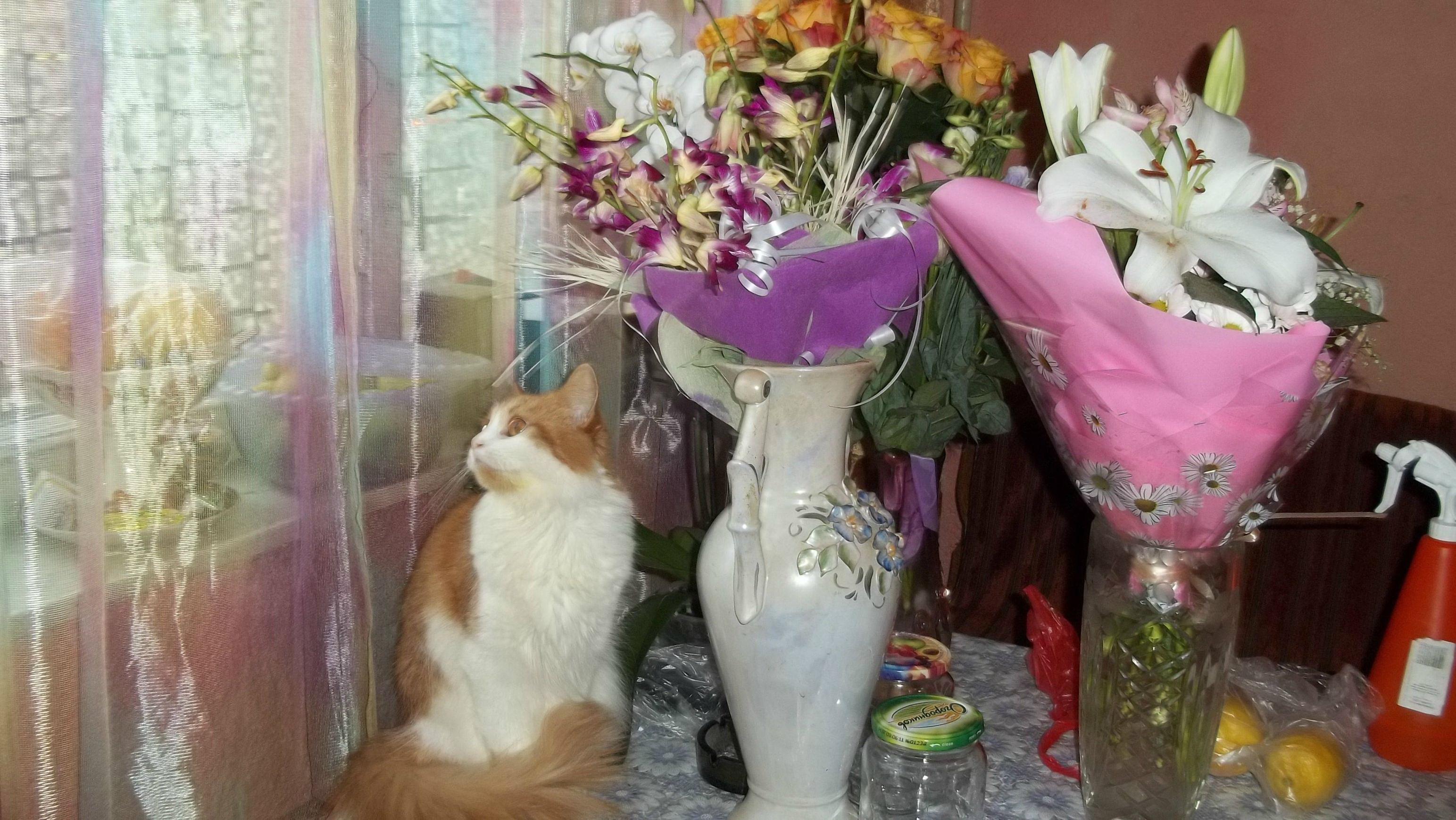 Кошка Нелли Ляля, 2012..jpg