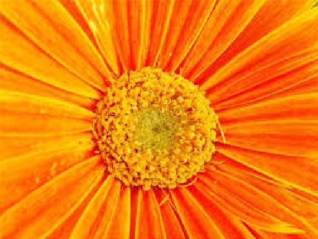 vliyanie-oranzhevogo-tsveta-seks
