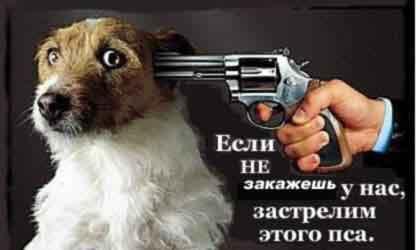 kill dog