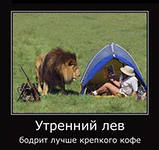 утренний лев