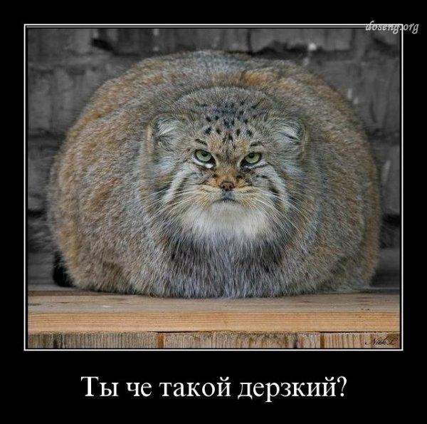 демотиватор кот