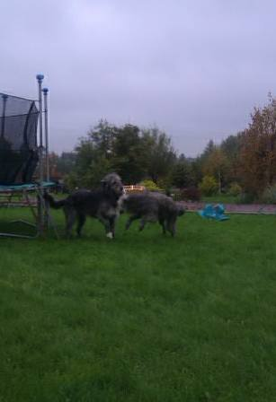 собаки на даче