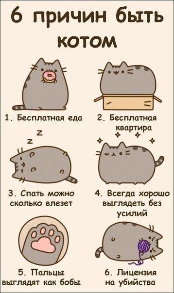 6 причин быть котом