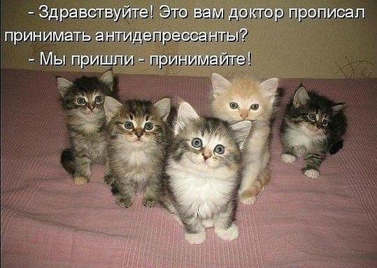 милые котики антидепрессанты
