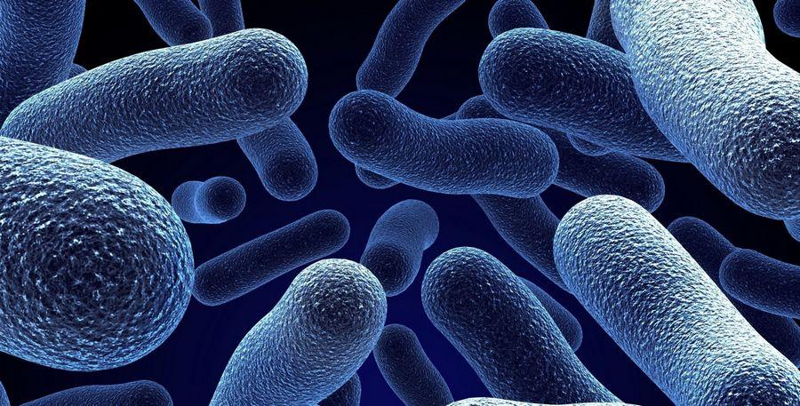 микробы.jpg