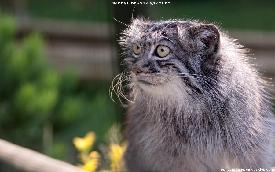 котик удивлен