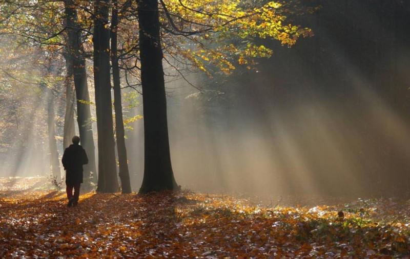 Фото: человек с топором в парке