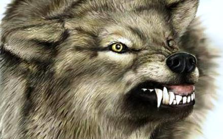wolf-foto
