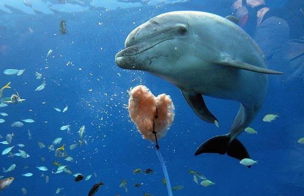 dolphin-valentine_1318523i