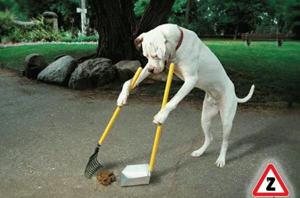 говно собачье фото