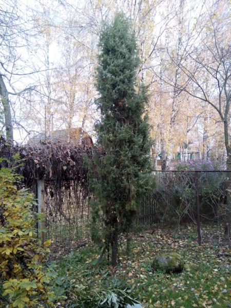 16102013-mozhzhevel