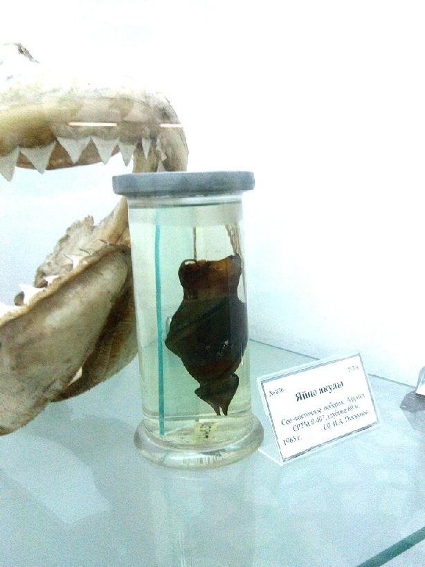 sharkegg