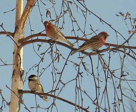 Картинки о весне с птицами