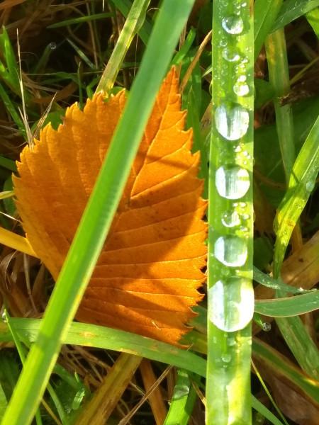 Иероглифы травы