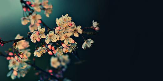 Twitter Headers Tumblr Flowers | www.pixshark.com - Images ...