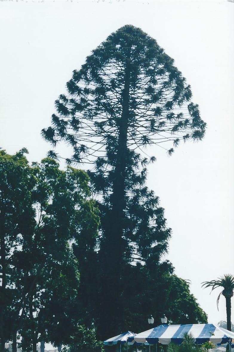 Fake pine tree