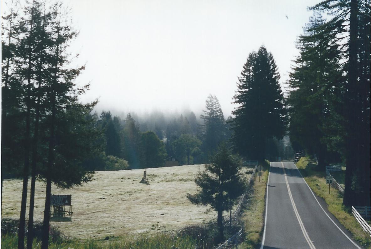 Northern California forrest morning fog