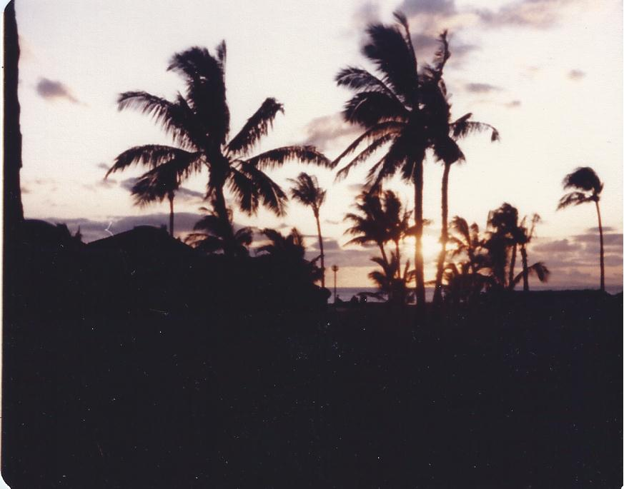 Palms.Hawaii 1984