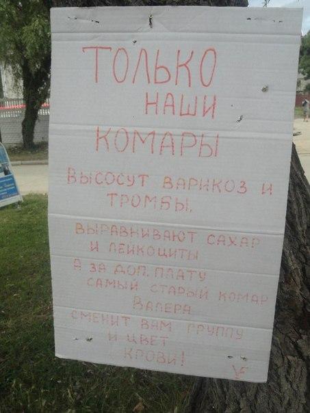 NASHI KOMARY VYSOSYT BARIKOZ